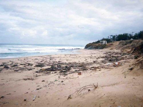 大波で浜全体が重油に覆われた