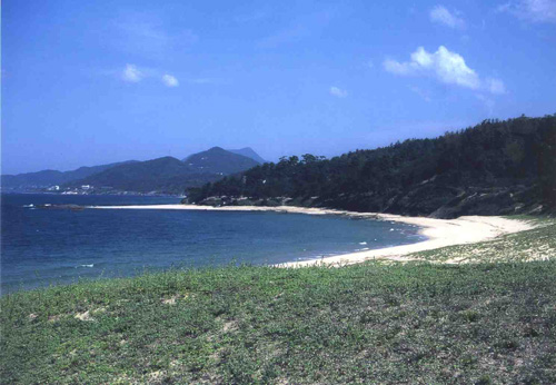 海浜植物の多い西側