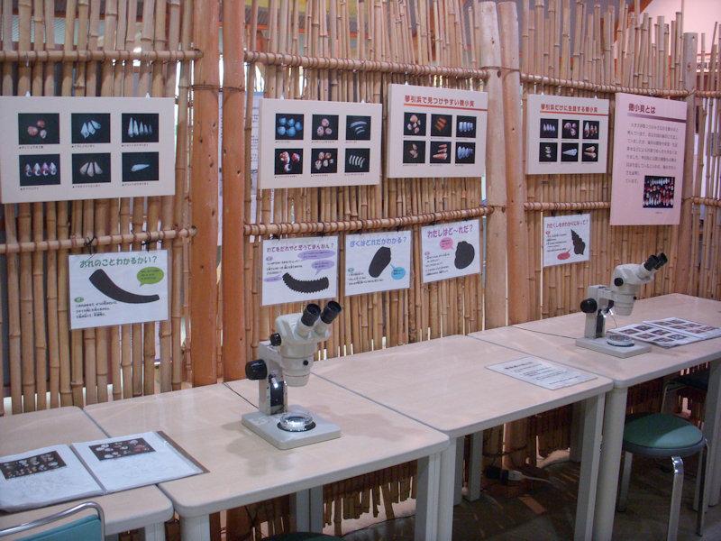顕微鏡の観察