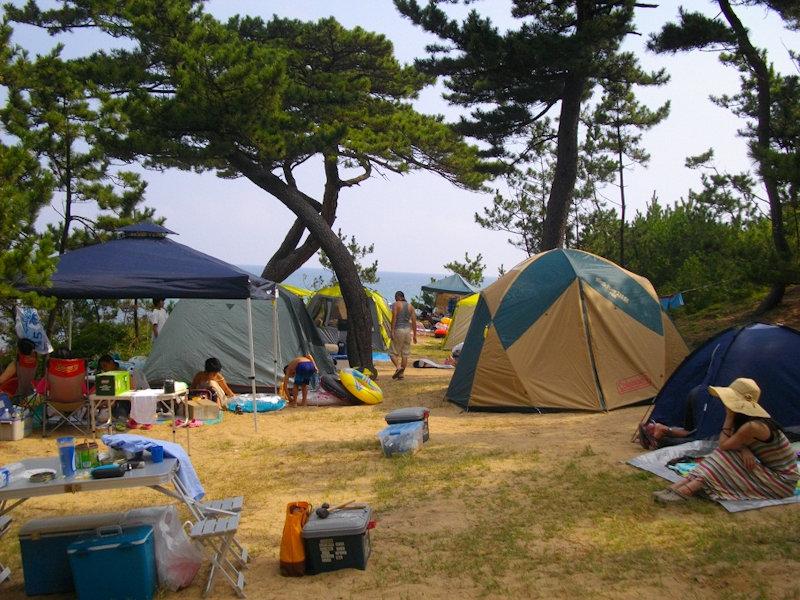 松林のキャンプ場